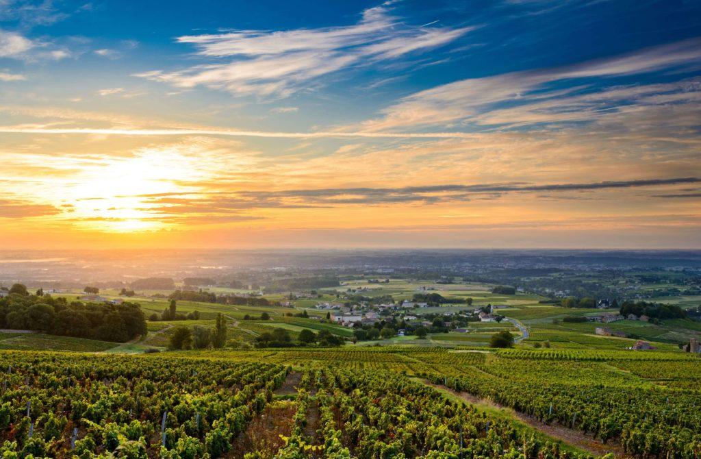 vigne française